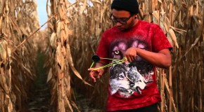 Joe Wilson – The Field – New Video
