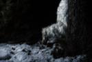 Yeti Release Details!